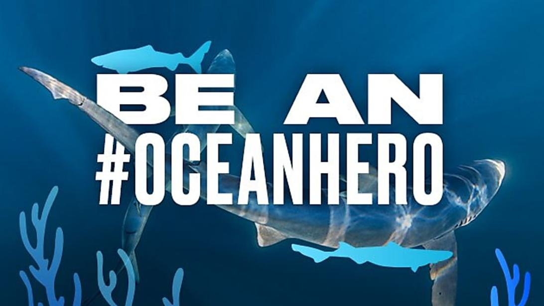Environmentalists search for 'ocean heroes' amid call for 10-year govt plan to save the seas
