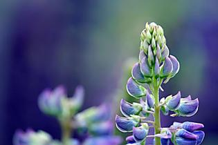Ces plantes qui ont démontré une action positive contre les virus