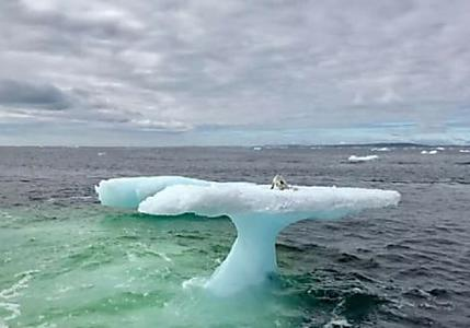[Photos] Fishermen Think They Found A Seal On A Floating Iceberg Until They Got A Closer Look