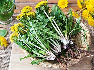 5 Plantes à cueillir autour de chez vous avec des propriétés insoupçonnées