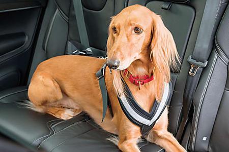 愛犬と一緒に温泉旅館に宿泊、飼い主が気をつけなくてはならないこととは?