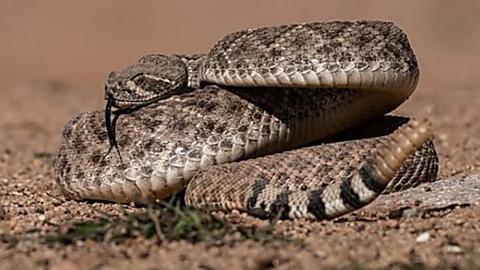 [Fotos] As 25 serpentes mais assustadoras já encontradas no planeta