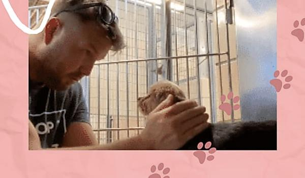 Man Comforts Mother Dog that Had a Miscarriage