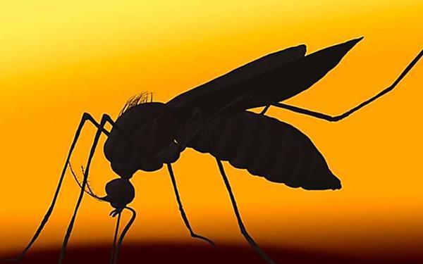 Pas d'odeur, pas de substances nocives: voici le nouveau tueur pour les moustiques